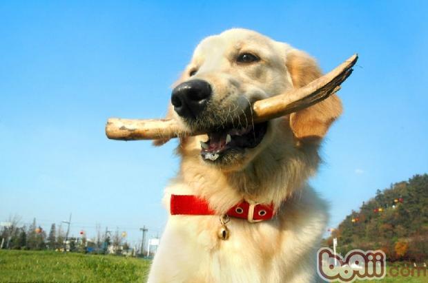 国外狗狗冬季保暖小妙招-成犬饲养
